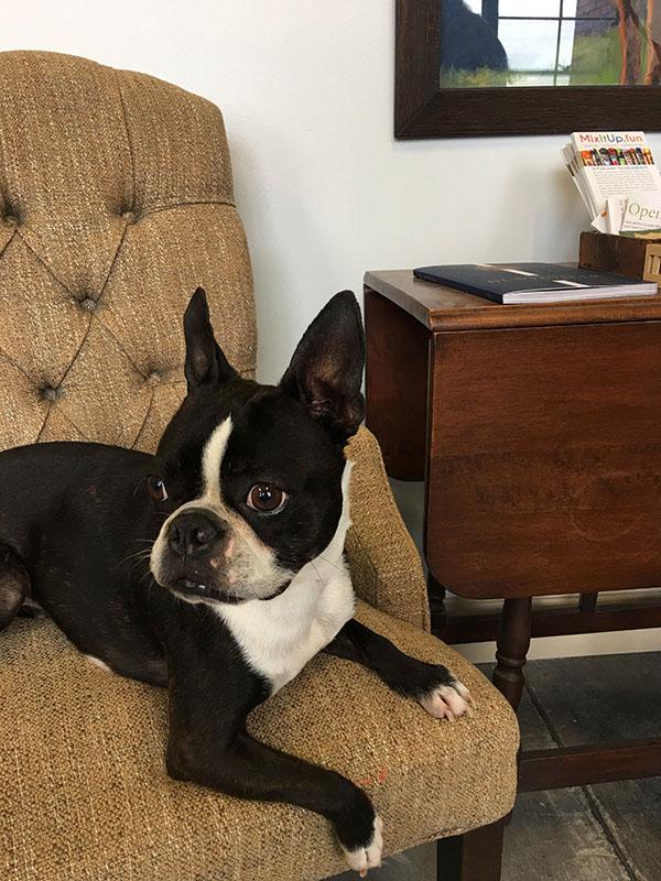 dog portrait of rebel